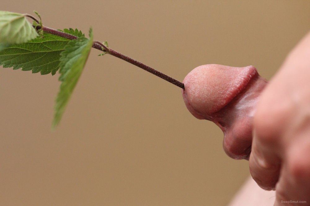 Stinging nettle Cock and urethra Fun playing with something unusual